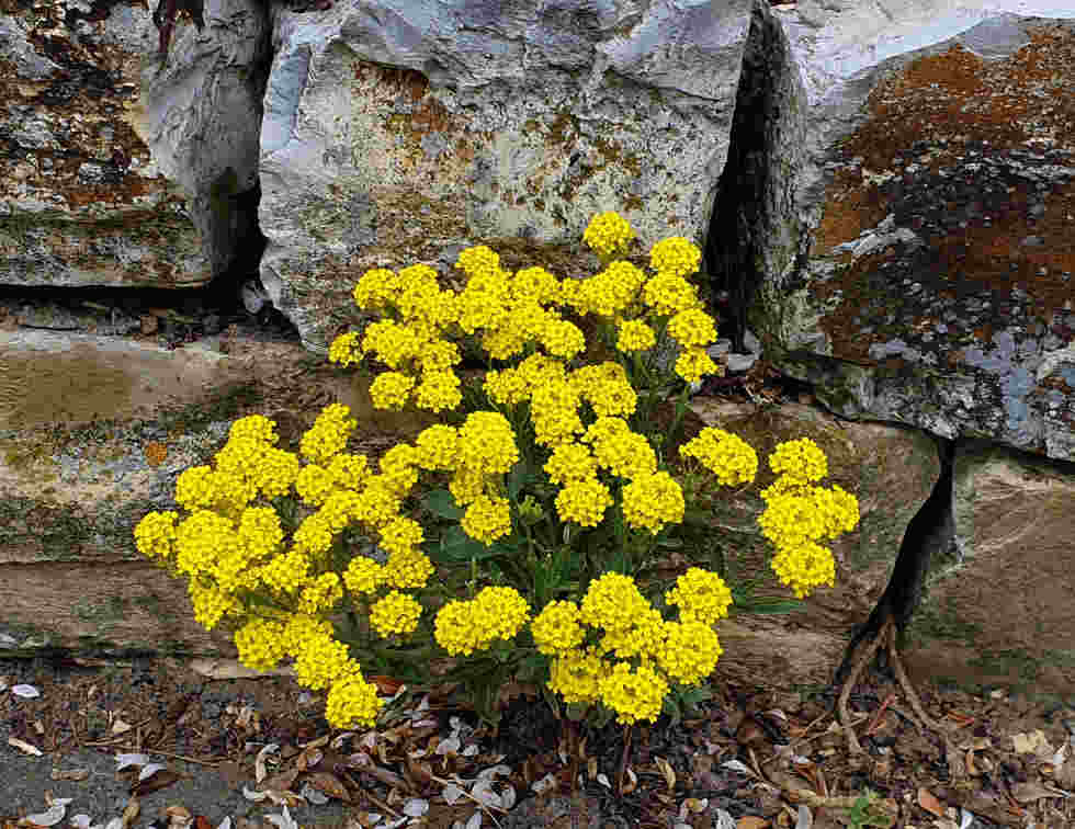 Blumen durchbrechen den Asphalt am Wegesrand